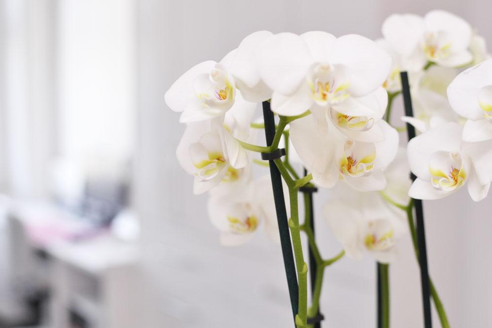 orchidee-frauimzentrum-lichtenfels